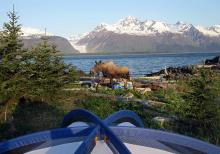 Moose in the kitchen, Skiff camping